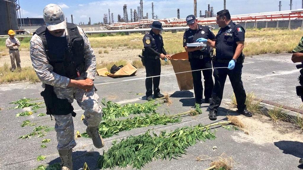 Hallan plantas de mariguana en refinería de Cadereyta. Noticias en tiempo real