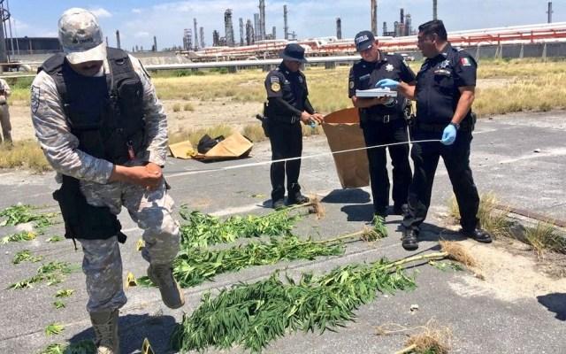 Hallan plantas de mariguana en refinería de Cadereyta - Mariguana Sedena Cadereyta refinería Pemex 3