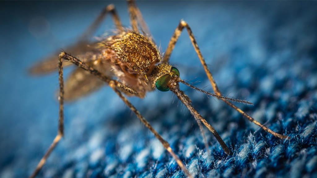 Suman 34 muertes confirmadas por Dengue en Honduras. Noticias en tiempo real