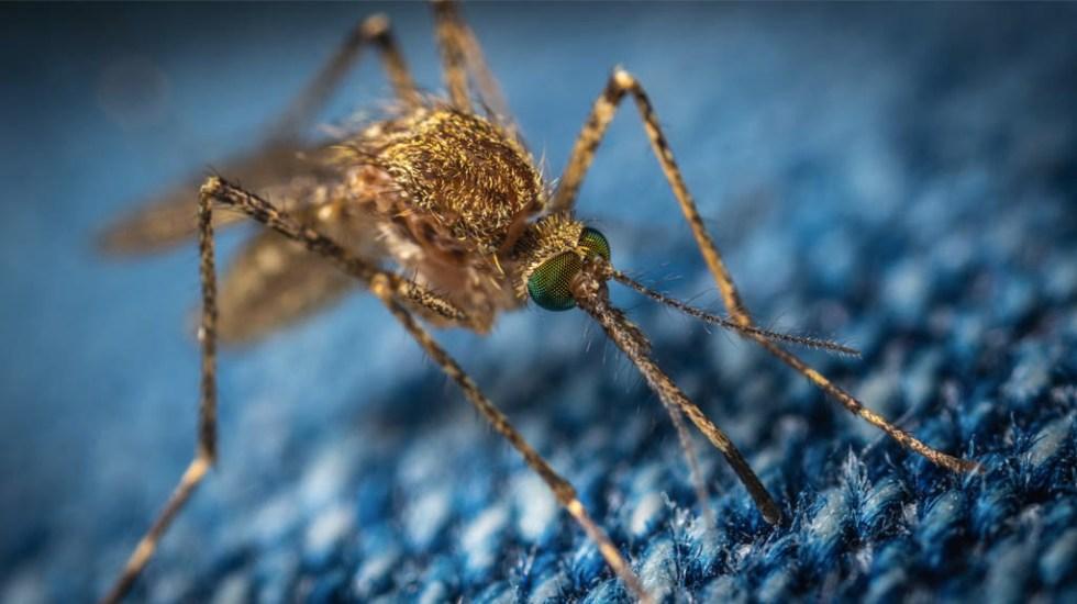 Suman 34 muertes confirmadas por Dengue en Honduras - Mosquito dengue mosco
