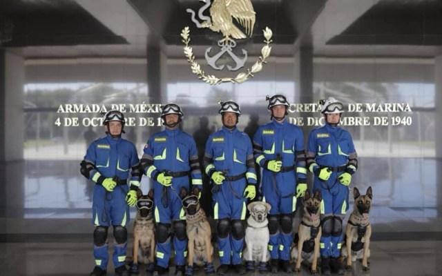 Semar homenajeará a binomios caninos en Día del Rescatista - Binomios caninos de la Marina. Foto de Santiago Arau
