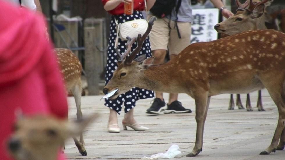 Ciervos mueren por comer plásticos que tiran turistas en Japón - Ciervos comiendo plástico en el Parque de Nara. Foto de @PDChina