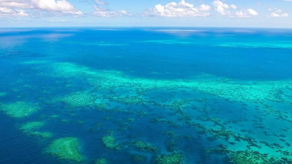 """GranBarrerade Arrecifes enfrenta retos """"sin precedentes"""" para recuperar sus corales - Gran Barrera de Arrecifes"""