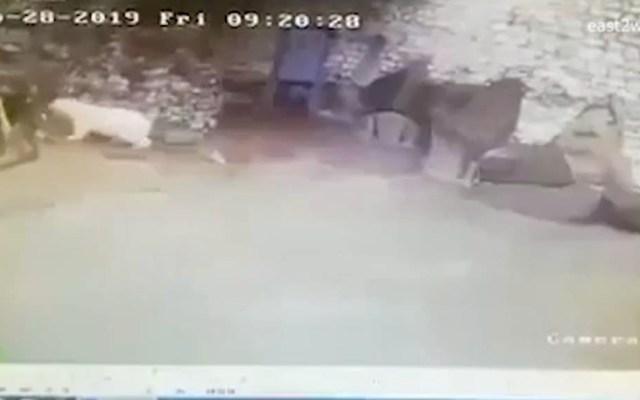 #Video Empleada de zoológico se defiende de oso polar con escoba y recogedor - Oso polar zoológico mujer