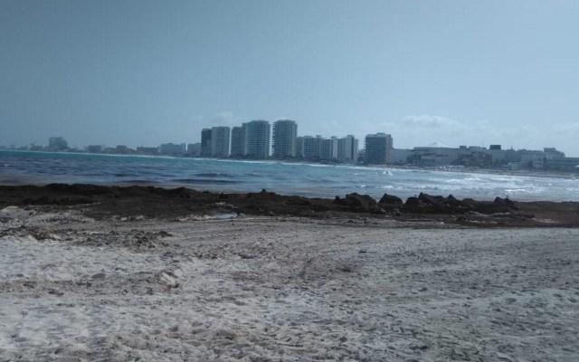 PAN exige al gobierno atender con seriedad el problema del sargazo - Sargazo mar Quintana Roo Cancún