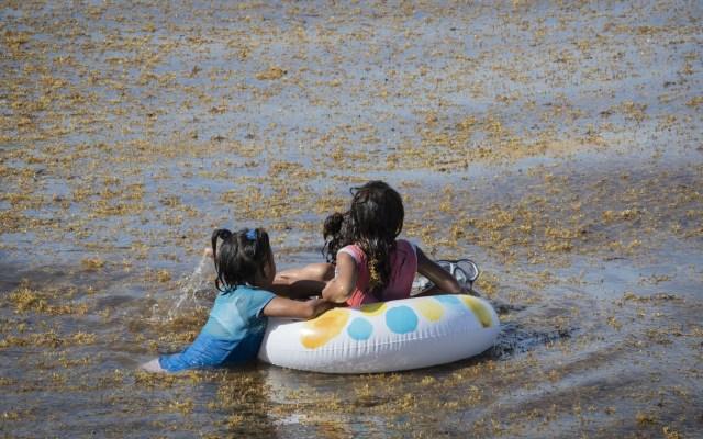 Destinos de Quintana Roo siguen con sargazo excesivo - Sargazo Playa del Carmen Quintana Roo