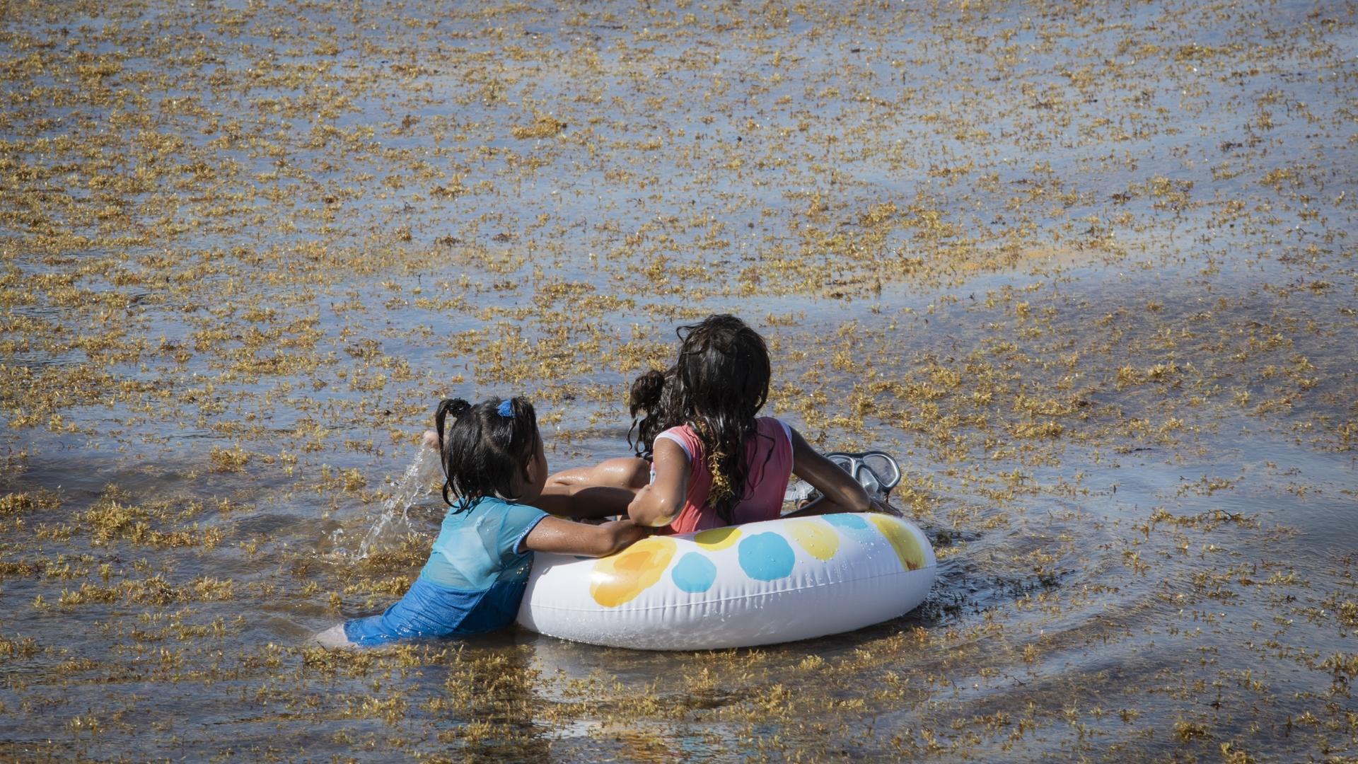Sargazo Playa del Carmen Quintana Roo