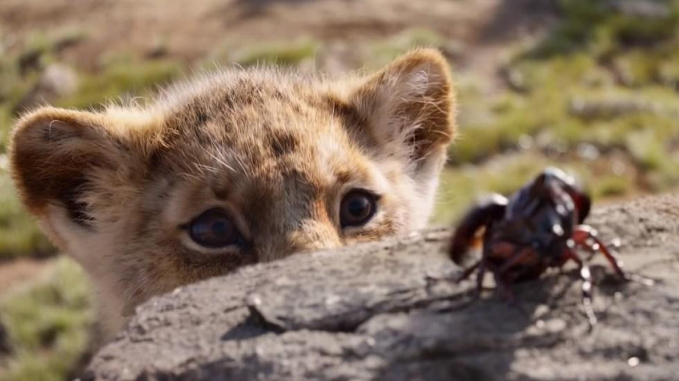 Revelan la única escena real de El Rey León - Simba practica la caza con un escarabajo. Captura de pantalla / Disney