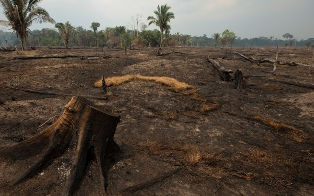 Aumenta 9.5 por ciento deforestación en Amazonía brasileña - Daños producidos en Porto Velho, Brasil, por incendio en la Amazonia. Foto de EFE