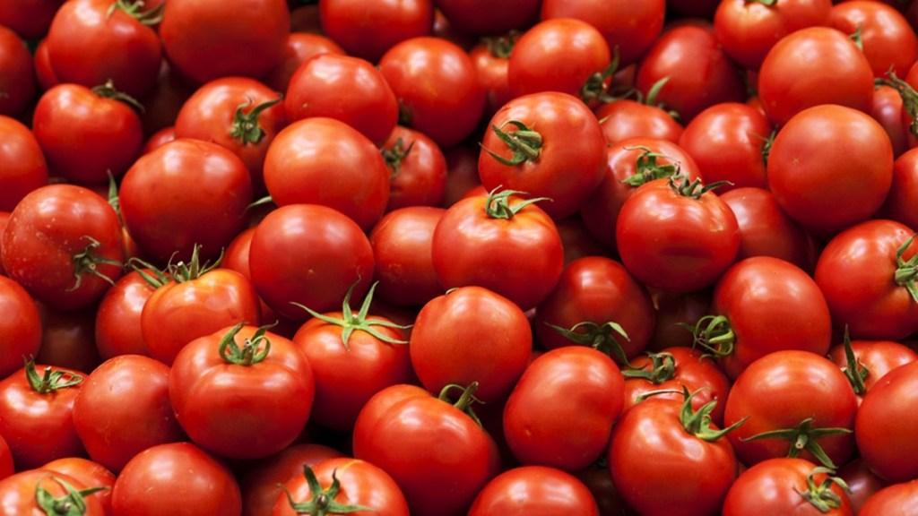 CNA esperará investigación de EE.UU. para resolver tema de tomate - tomate