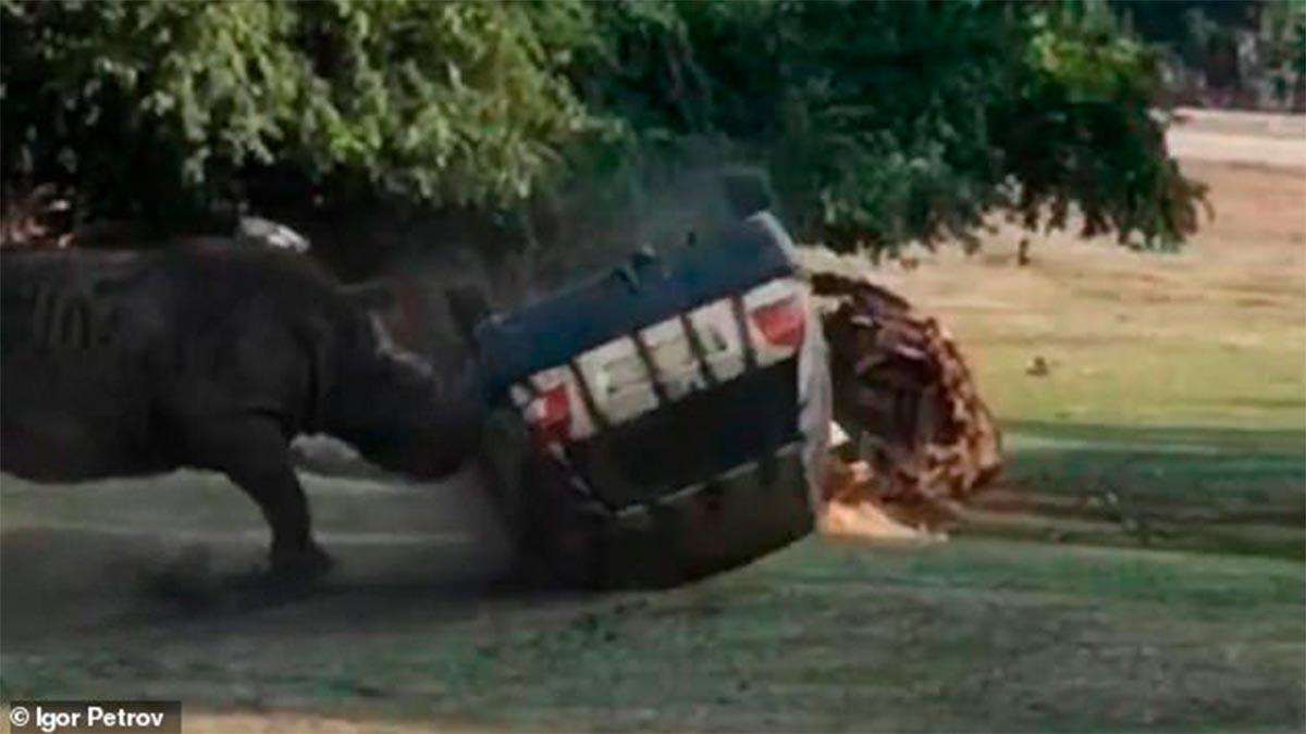 Rinoceronte enojado ataca y voltea un automóvil con su cuidadora dentro — Alemania