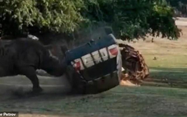 #Video Rinoceronte ataca y vuelca automóvil en safari de Alemania - rinoceronte safari alemania vehículo