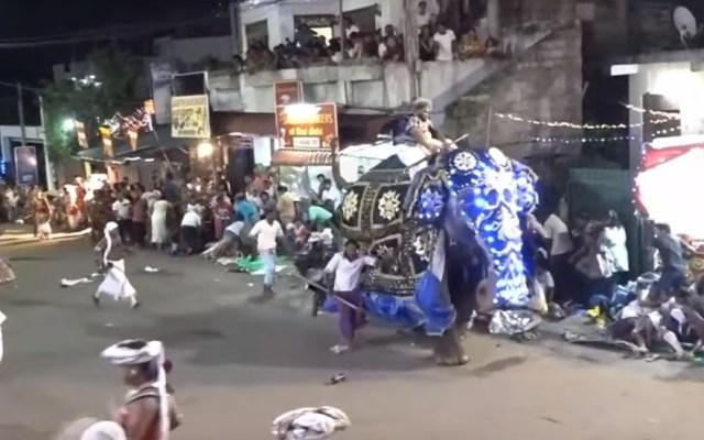 #Video Elefante pisotea a asistentes de desfile religioso en Sri Lanka - Elefante contra asistentes a procesión religiosa. Captura de pantalla