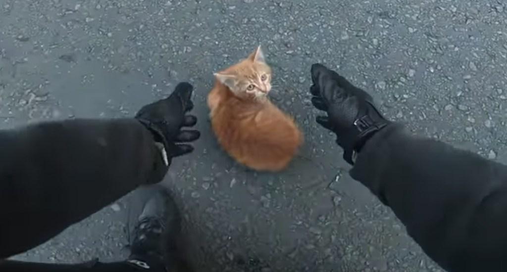 #Video El milagroso rescate de un gato en una carretera - Foto de @quentinleroyy