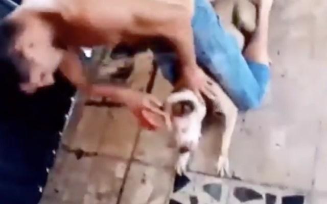 Catea PGJ domicilio de hombre acusado de maltrato animal en Iztapalapa - Foto de captura de pantalla