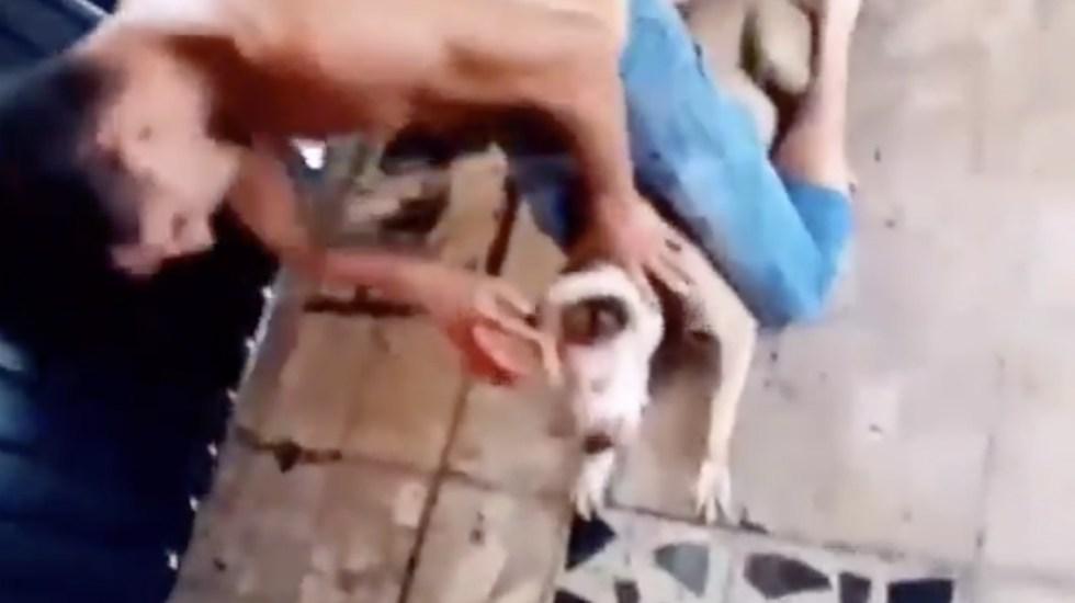 #Video Hombre maltrata y mata a perro pitbull en la Ciudad de México - Foto de captura de pantalla