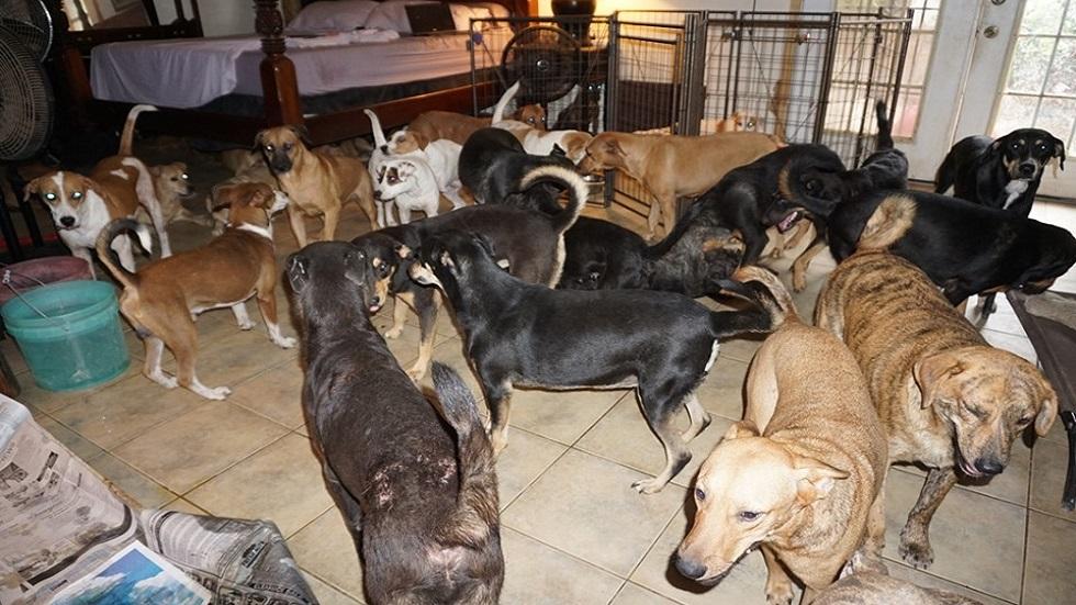 Perros rescatados en casa. Foto de @chella.melnechuk