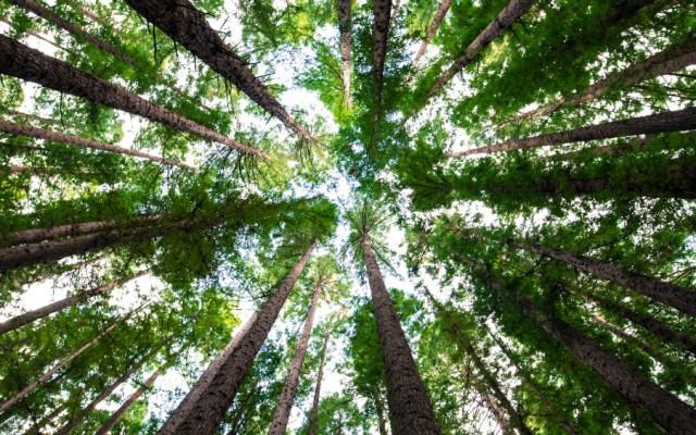 Reforestación en Rusia ayudaría a enfrentar el cambio climático - Foto de Arnaud Mesureur para Unsplash