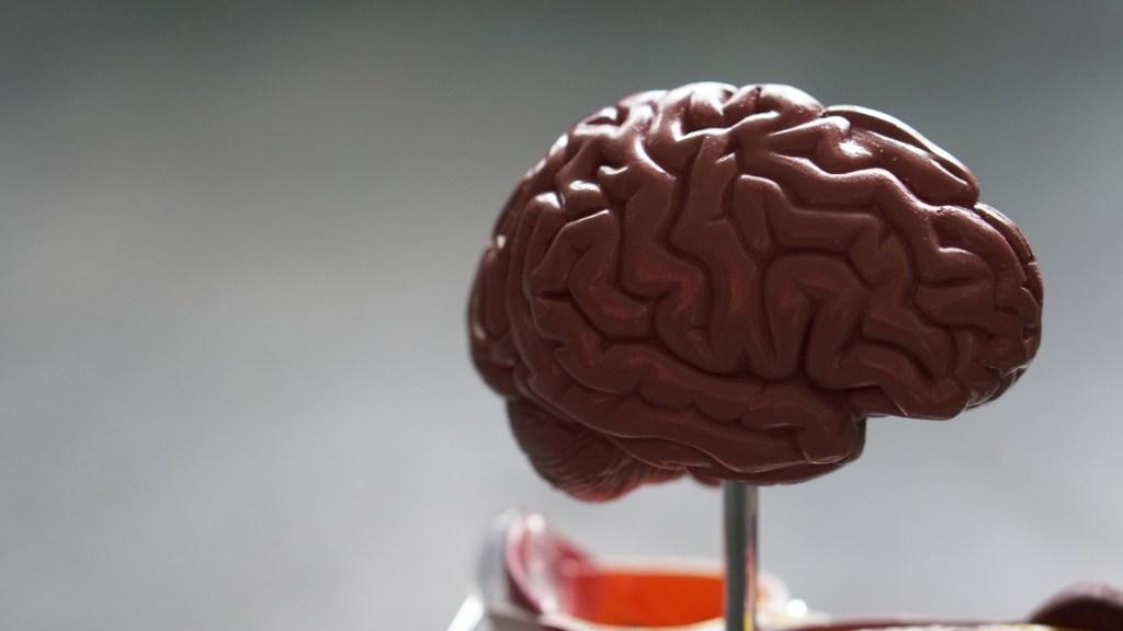 Identifican región del cerebro relacionada con consumo excesivo de alcohol - Cerebro. Foto de Robina Weermeijer / Unsplash