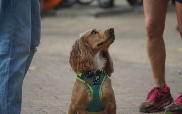 #Video Los perros también sienten celos - Perro celoso. Foto de Alex Hay / Unsplash