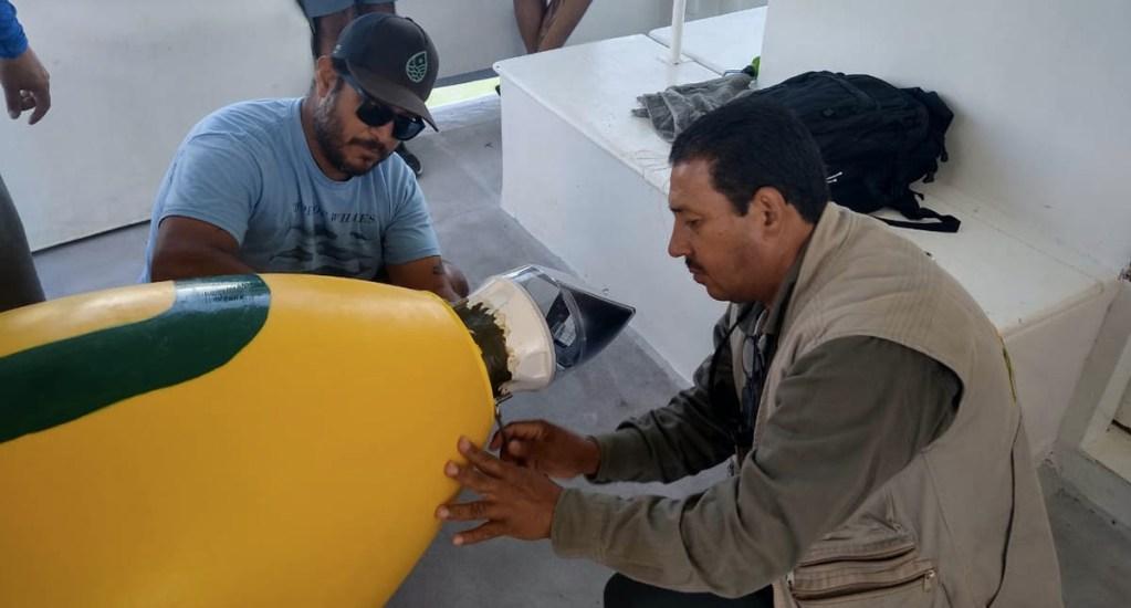 Continúa colocación de boyas para proteger a la vaquita marina - Profepa Vaquita Marina Boyas