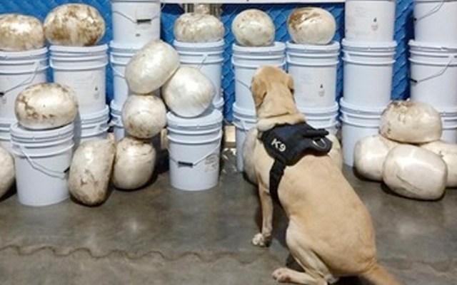 Guardia Nacional incauta en Culiacán 144 kilos de metanfetamina - Guardia Nacional incauta 144 kilos de metanfetamina en Culiacán