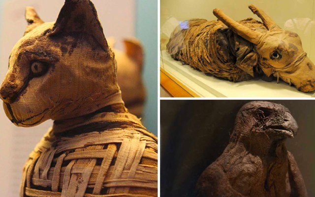 Ministerio de Antigüedades de Egipto presenta momias de animales - Momias de animales