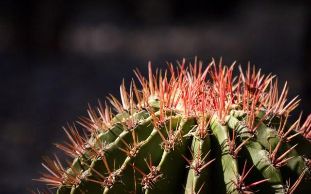 Un emprendedor que enseña a cultivar cactus - Foto de PIxabay.