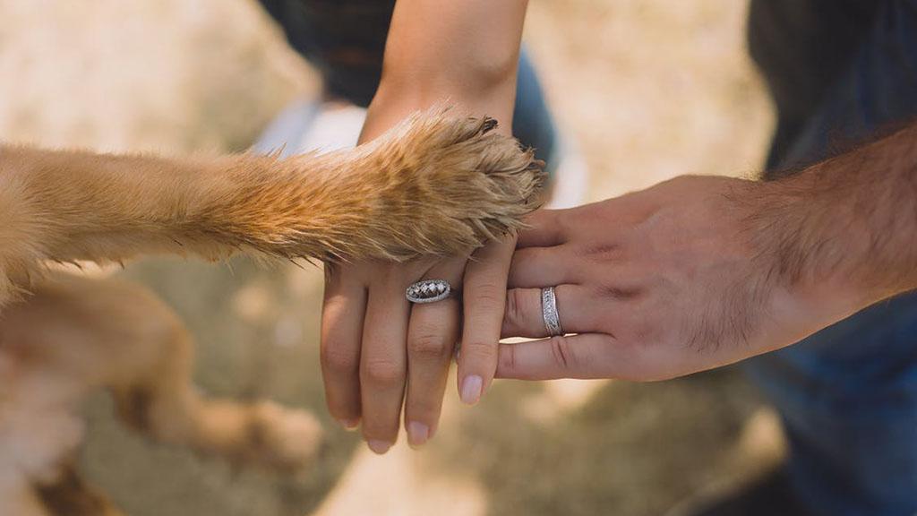 Animales de compañía ayudarían a enfrentar mejor trastornos mentales - Los perros pueden ayudar a las personas a superar la depresión. Foto de @allianceoftherapydogs
