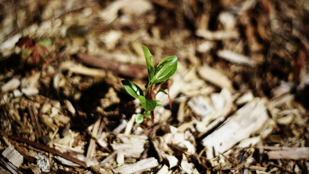 Crisis climática cambiará relación entre plantas y organismos del suelo - Planta. Foto de Maddy Baker / Unsplash