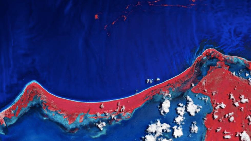 Así se ve el sargazo en Holbox desde el espacio - Foto de ESA