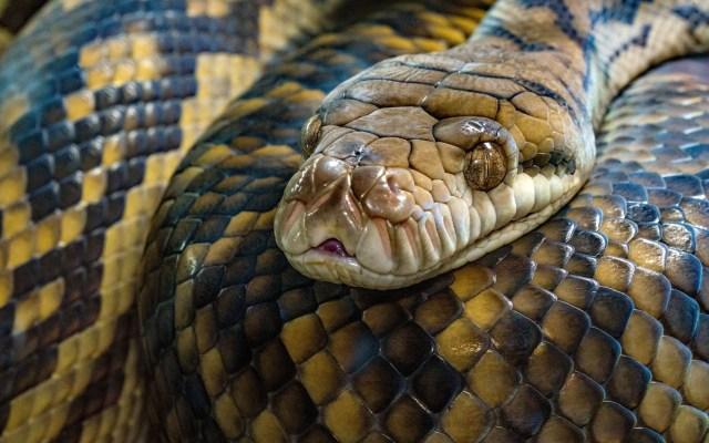 Mordedura de serpiente provoca 384 muertes diarias, alerta OMS - Serpiente víbora salud mordedura