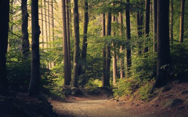 Genética podría ayudar a rescatar árboles del cambio climático - Foto de Lukasz Szmigiel @szmigieldesign