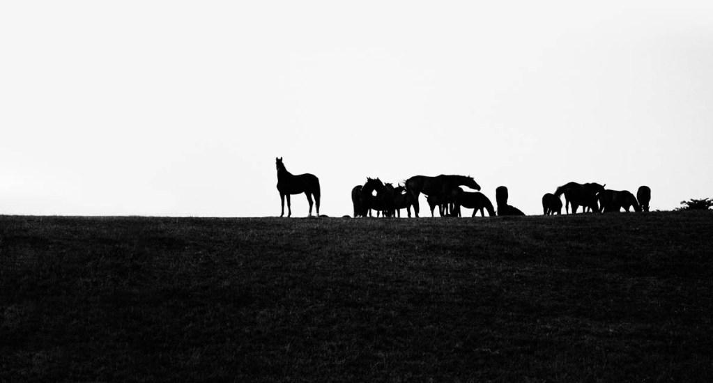 Matan a balazos a 15 caballos en Kentucky - caballos campo