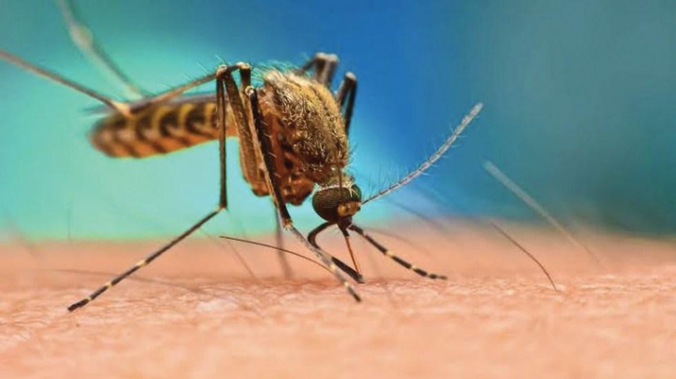 Suman 194 casos de dengue en Buenos Aires, Argentina - Foto de CNN