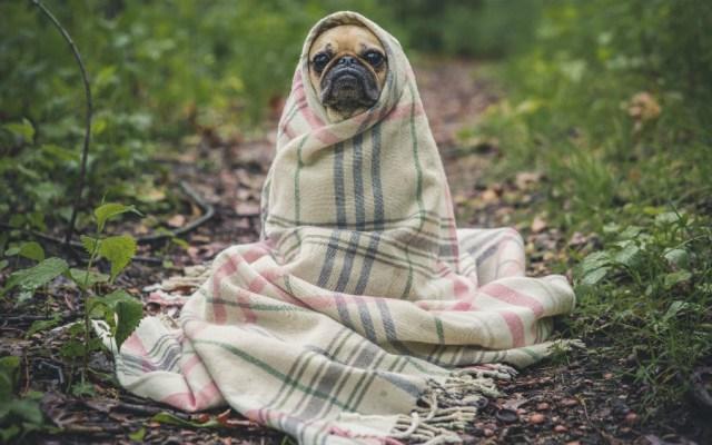 Llaman a proteger mascotas en temporada invernal - Foto de Matthew Henry para Unsplash