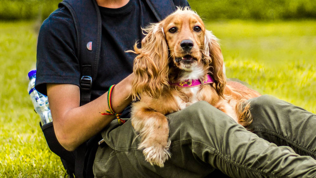 Leptospirosis, una enfermedad que se transmite de perros a humanos - Perro humano mascotas hombre