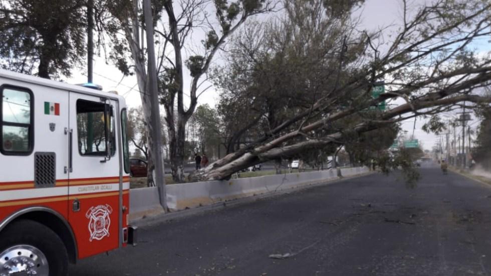 Ráfagas de viento en México son provocadas por 'corriente en chorro' - Arbol caído vientos Edomex