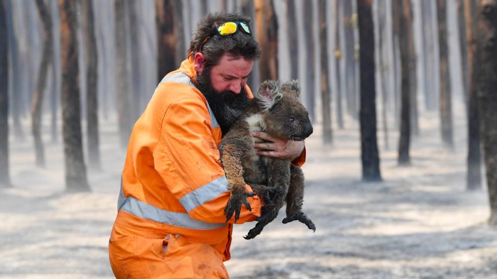 Más de mil millones de animales han muerto por incendios forestales de Australia - Más de mil millones de animales han muerto por incendios forestales de Australia