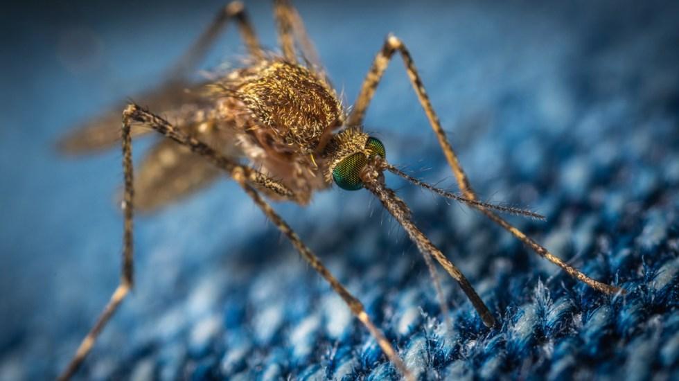 Diagnostican con dengue al presidente de Paraguay, Mario Abdo Benítez - El mandatario de Paraguay está afectado por el serotipo DEN 4, que es el dominante en el país suramericano