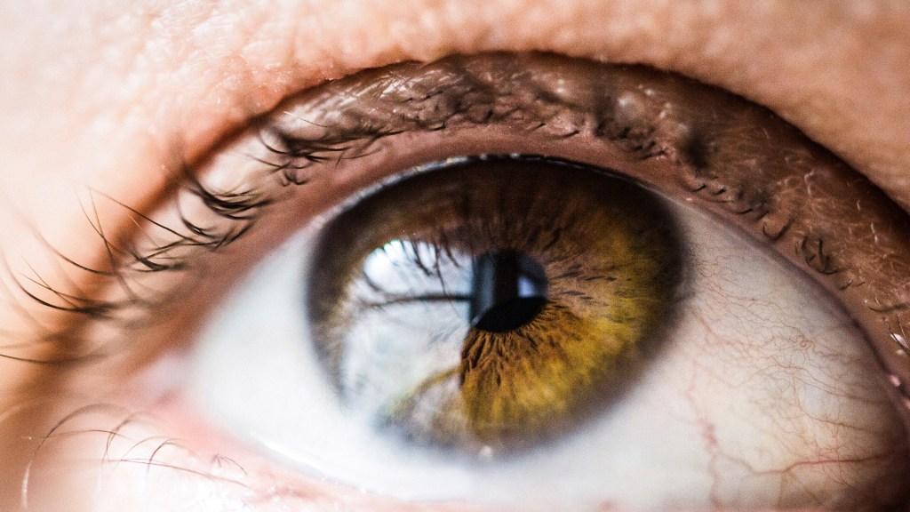 UNAM usa inteligencia artificial para detectar retinopatías - Foto de Vanessa Bumbeers / Unsplash