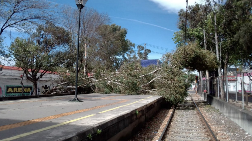 Al menos 34 árboles caídos y un menor herido por fuertes vientos en la capital - Foto de @STE_CDMX