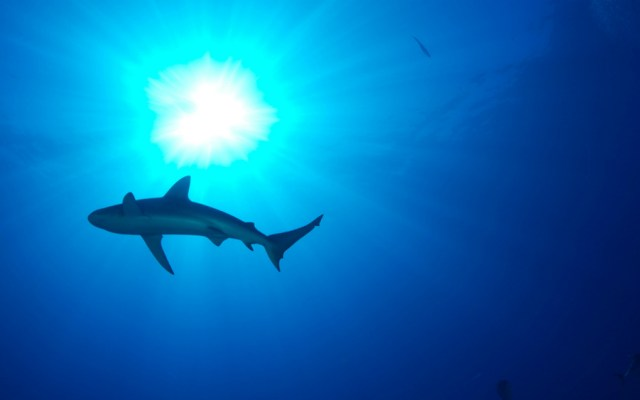 EE.UU. incauta lote con mil 400 aletas de tiburón de barco anclado en Miami - Foto de FWS