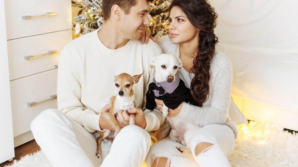 ¿Es buena idea regalar un perro en San Valentín? - Foto: PIxabay.