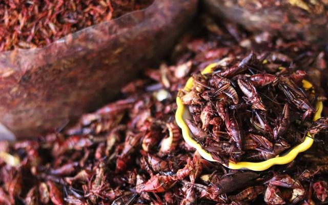 Estudiantes de la UNAM crean alimentos alternativos a la carne con chapulines - Los estudiantes de las facultades de Economía, Contaduría y Administración, y Ciencias, implementaron el proyecto Chapi