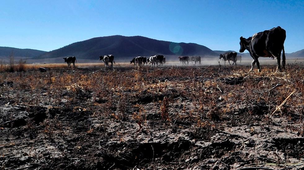 Crisis climática convertiría en desplazados internos a tres millones de mexicanos - Época de sequía en la comunidad Ejidal Matamoros, municipio de Galeana, en el estado de Nuevo León. Foto de EFE