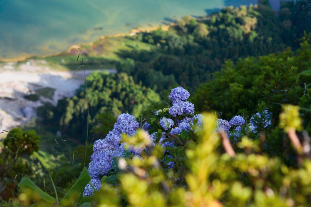 La tecnología, un 'salvavidas' para preservar la biodiversidad - Photo by Rui Silvestre on Unsplash