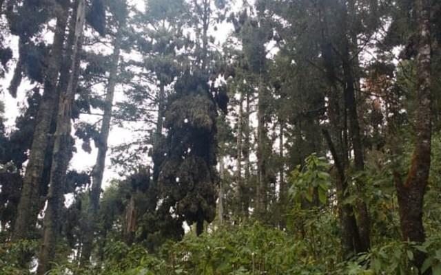 Realizan pruebas para determinar qué animal mató a habitante de Valle de Bravo - Valle de Bravo árboles