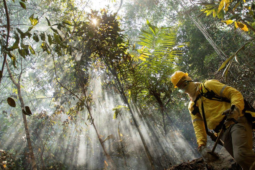 Brasil vincula deforestación de Amazonía con pandemia de COVID-19 - Foto de EFE