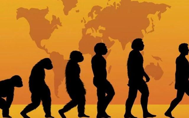 Proteínas podrían reescribir la evolución humana - La paleoproteómica, un nuevo método que permite recuperar moléculas de fósiles muy antiguos y reconstruir con precisión etapas de la evolución humana